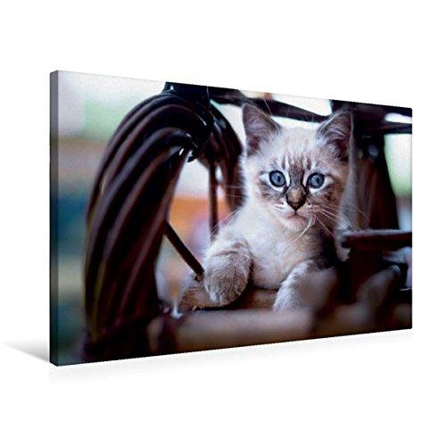 Premium Textil-Leinwand 75 cm x 50 cm quer, Lieblingsplatz | Wandbild, Bild auf Keilrahmen, Fertigbild auf echter Leinwand, Leinwanddruck (CALVENDO Tiere)