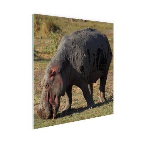 Lieblingsfoto.de Weiden lassen Hippo - Foto auf Plexiglas - 30x20 cm (Verfügbare Formate: 30x20, 60x40, 90x60, 120x80) TOP-Qualität Glas bild!