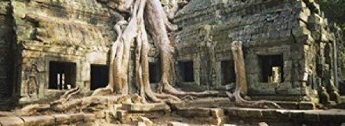 Old ruins of a building, Angkor Wat, Cambodia Poster Print (36 x 13)