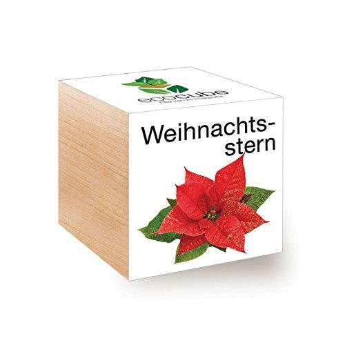 Ecocube Weihnachtsstern im Holzwürfel