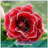 Vistaric ZLKING 100pcs Cinese Molto Bello Rosso Gloxinia Semi di Bonsai Natura Fresca Tutte Le Stagioni Disponibili Decorazione Semi in Vaso pianta