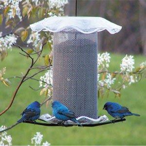 Birds Choice 3Qt. Forever Nigersamen Feeder Vogelhäuschen klar Farbe - Forever Feeder