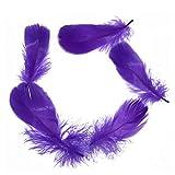 Sellify 300pcs plumes d'oie de bricolage 8-12 cm 3-4 pouces de plumes d'oie plumes Plumes Lavé
