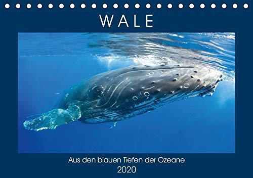 Wale: Aus den blauen Tiefen der Ozeane (Tischkalender 2020 DIN A5 quer)