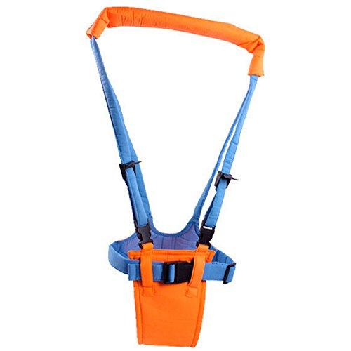 Zanasta Lauflernhilfe für Baby und Kleinkinder mit stabilem Griff und verstellbare Gurte   Für mehr Sicherheit beim Laufenlernen, Orange-Blau