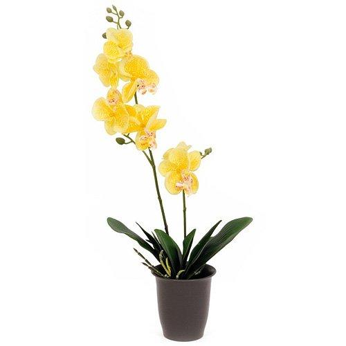 euro-palms-82530332-pianta-ornamentale-orchidea-57-cm-giallo-gelb