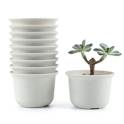 Cactus Pots Amazon Co Uk