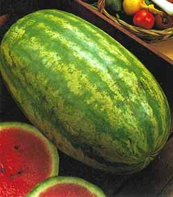 premier-seeds-direct-wml04-water-melon-striped-klondike-blue-ribbon-seeds-pack-of-60