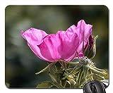 Gaming-Mauspads, Mauspad, Wild Rose Rose Hip Natur Dog Rose Blossom Bloom