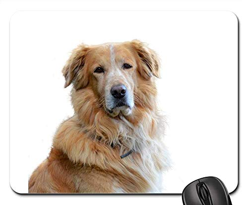 Gaming-Mauspads, Mauspad, Golden Retriever Hund Hundeportrait Haustier