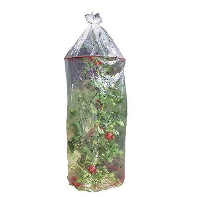 Schumm Tomatenreifehauben mit Abstandsringen, 1,3 x 0,65 m, transparent von Plastia bei Du und dein Garten