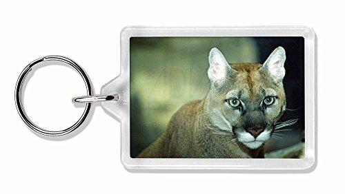 Preisvergleich Produktbild Atemberaubende Big Cat Puma Foto Schlüsselbund TierstrumpffüllerGeschenk