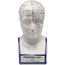 Ampliación de 30cm Busto de la cabeza de la frenología anatomía naturópata