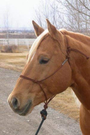 Double Diamond Knotenhalfter Buck Brannaman Solid Color Brown Warmblut -