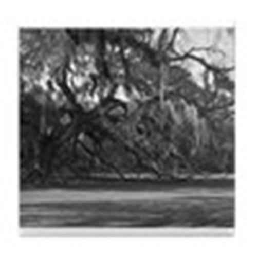 ted Eiche–Tile Untersetzer, Drink Untersetzer, Untersetzer, Klein (Scary Halloween-bäume)