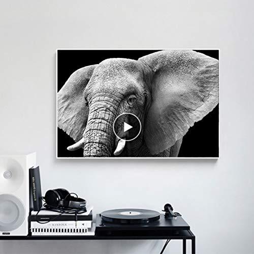 Danjiao Blanco Y Negro África Salvaje Elefante Animal