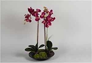 2er-SET Orchidee Phalaenopsis in Schale fuchsia 70 cm