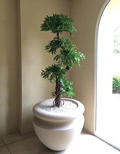 Plantas Bonitas De Interior Best With Plantas Bonitas De Interior - Plantas-bonitas-de-interior