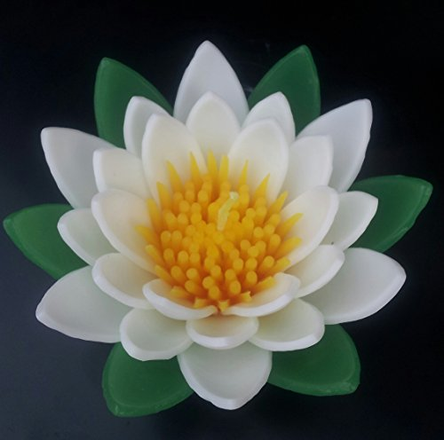 WasiWax Duftkerze grün/weiß Water Lily Schwimmende Kerze, groß (Grüne Schwimmende Kerzen)