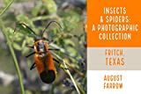 Insects & Arachnids: A Photographic Collection: Fritch, Texas: United States (English Edition)