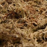 Terra Exotica Sphagnum Moos 250 g, gepresster Ziegel, Spagnum Moos