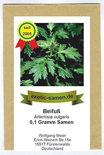 Beifuß - Artemisia vulgaris (0,1g Samen) = mindestens 500 Samen