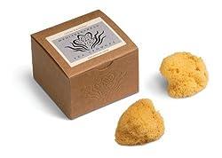 Accessories 22 Silk Sea Sponges, Gift Box