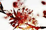 Quadro su Tela Canvas su Telaio in Legno 70x100 cm - Primavera