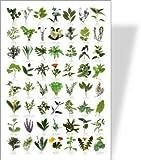 Buzz Garden Herbs Poster–56Kräuter Bilder
