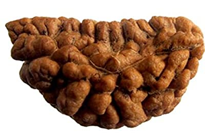 Himalaya 1 Mukhi Chandrakar Rudraksha Bead (Lab Certified) natural one face rudraksh Extra Big Size (Lab Certified) / natural 1 face rudraksh / one mukhi rudraksh / original rudraksh for Men / natural Rudraksh / Rudraksh For man - Collector Size Rudraksh