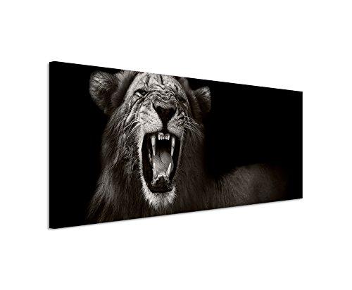 Bild 120x40cm Tierbilder - Brüllender afrikanischer Löwe schwarz weiß