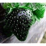 ScoutSeed Black Strawberry 20 Semillas - ¡Baja en azúcar y ácido!Delicioso