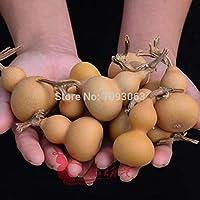 Shopmeeko Packung mit 10 Stück natürliche Kürbis 4-6cm Kürbisse Mini Cute