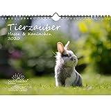 Calendrier 2020, motif lapin et lapins - Format A4-1 carte de vœux et 1 carte de Noël