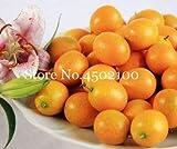 AGROBITS Promoción! 50 Pcs Balcón Patio árboles de frutas kumquat Bonsai Garden naranja mandarina Flores enano Cítricos Juicy Orange Tree Fruit: 4