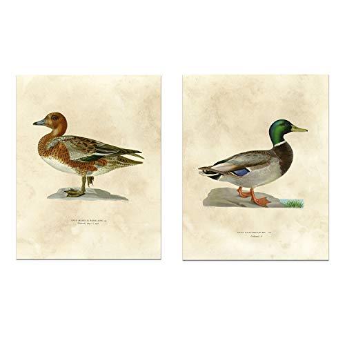 Hudson Frames Kunstdruck, antike Enten, Vintage-Natur, Kunstdruck, 20 x 25 cm, 2 Stück - Ente Frame