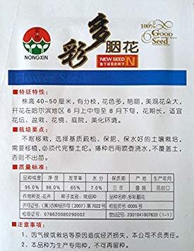 CUSHY 100 Stück/Beutel Regenbogen Rouge Samen, Original-Pack-Rare Big Garden Bonsai Samen H 40-50...
