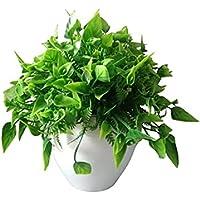 HYPERBOLES Artificial Bonsai Plant with Pot - 6 Inch/15 cm