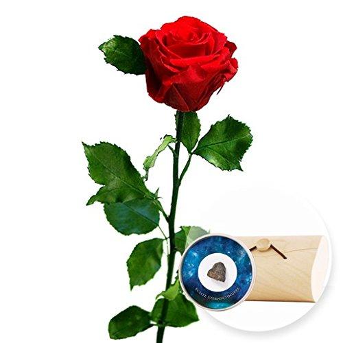 1 haltbare Rose rot und Echte Sternschnuppe