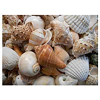 SEVA Natural Coloured Sea Shells 400 g Pack for Aquariums/Art and Crafts/Table Decoration (Multicolour, Mix, Sea Shell)