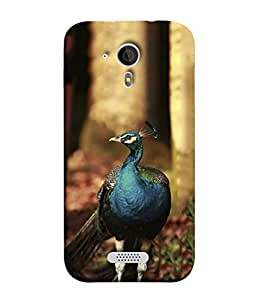 PrintVisa Designer Back Case Cover for Micromax Canvas HD A116 (bird waiting for rainy season)