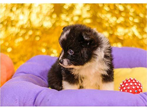 Voller Diamant Malerei Stickerei Diamant Mosaik Diy 3D Diamant Malerei Kreuzstich Niedlichen Hund Und Roten Ball Strass 30X40cm (Rote Hund-ball)