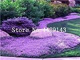 IDEA HIGH Semi-100 Pz Rare ROCK Cress Bonsai Pianta rampicante Timo Pianta Perenne copertura del suolo fiore per la casa decorazione del giardino: 6