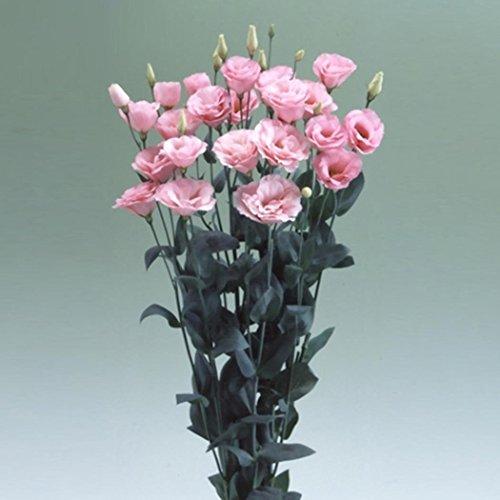 Arbre rares Crimson rose rouge Graines de fleurs, 20 graines, fleurs de jardin parfumé lumière pour décor terre maison Miracle