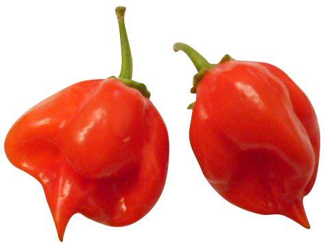 Habanero Red Savina 10 Samen (Extrem scharfe Chili) Ehemalige Weltmeisterin in Sache Schärfe