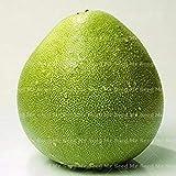 Vistaric 20 STÜCKE Thai Green pomelo samen Grapefruit baum samen obst samen Seltene Organische gesundheit pflanzen für hausgarten pflanzen