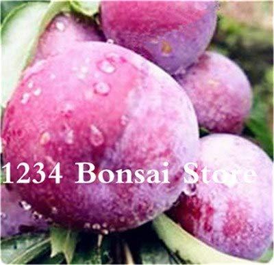 Bloom Green Co. Haute qualité 20 pcs Rare Noir Brin prune Bonsai fruit délicieux douce bio arbre & quot; krim noir & quot; Légumes et fruits Plante en pot: 8