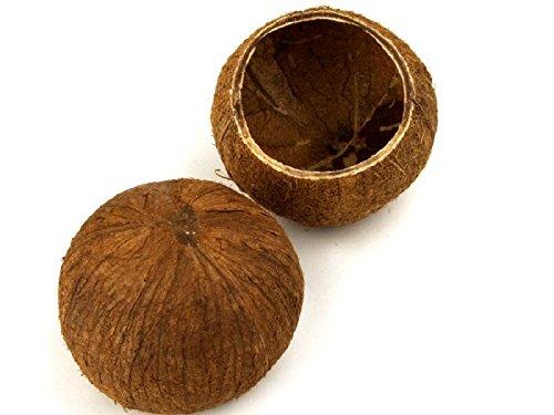Kokos Becher, Kokosnuss Schale - 2
