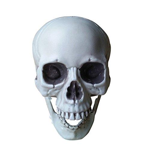ukcoco Simulation Skull Dekoration Scary Skull Figur in Skelett für die Dekoration von ein Experiment von Dekoration, 13,5x 9x 10cm