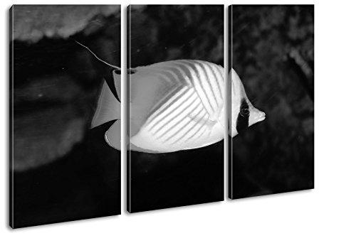 deyoli Dark entzückender Zierfisch Effekt: Schwarz/Weiß Format: 3-teilig 120x80, Motiv fertig gerahmt auf Echtholzrahmen, Hochwertiger Digitaldruck mit Rahmen, Kein Poster oder Plakat